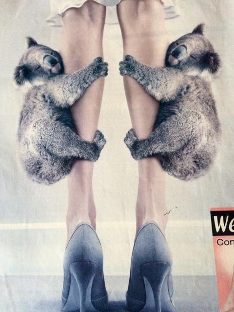 bébés koalas