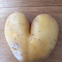 Pomme de terre forme coeur